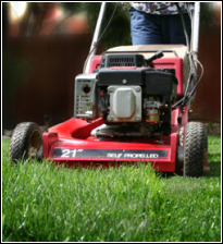 Grassclippings - Autumn Mowing of Lawn