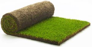 Grass Clippings - RolawnMedallionTurf