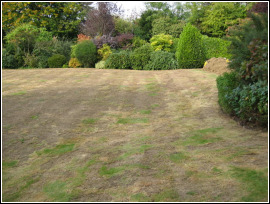 Grass Clippings - How to Scarify your Lawn