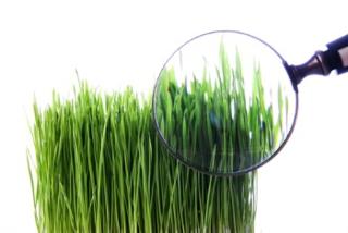 Grass under the Microscope