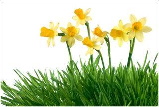 Lawn Shop - Spring Lawn Care
