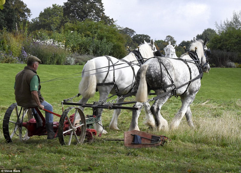 Grass Clippings - Two Horse Power Mower