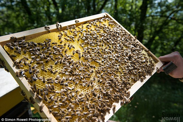 Weed Free - Pesticide danger to Bees
