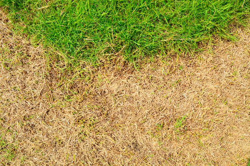 Grass Clippings - 2018 Hose Pipe Ban