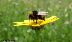 Grass Clippings - Bees Prefer Urban Gardens