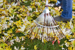 Grass Clippings November Lawn Care Tips