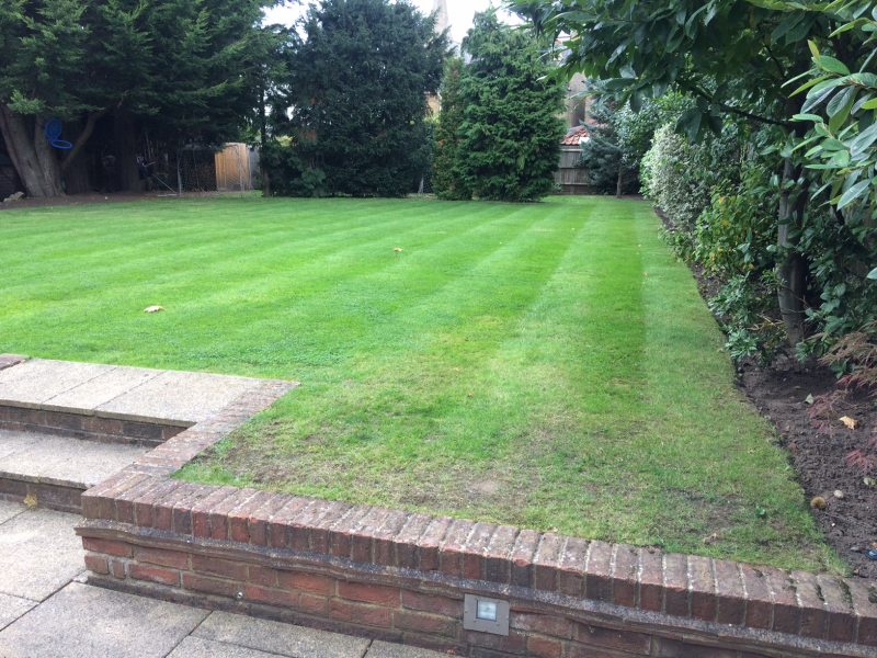 Grass Clippings - Worn Lawn
