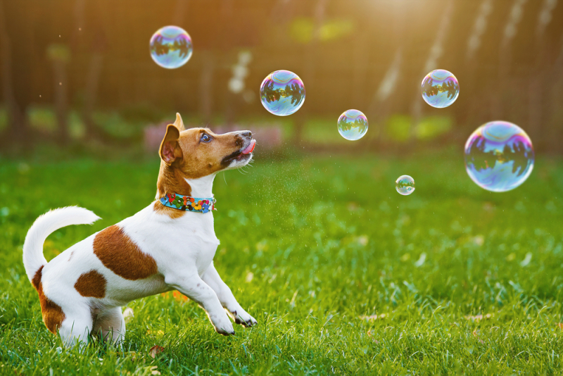Dog & Bubbles