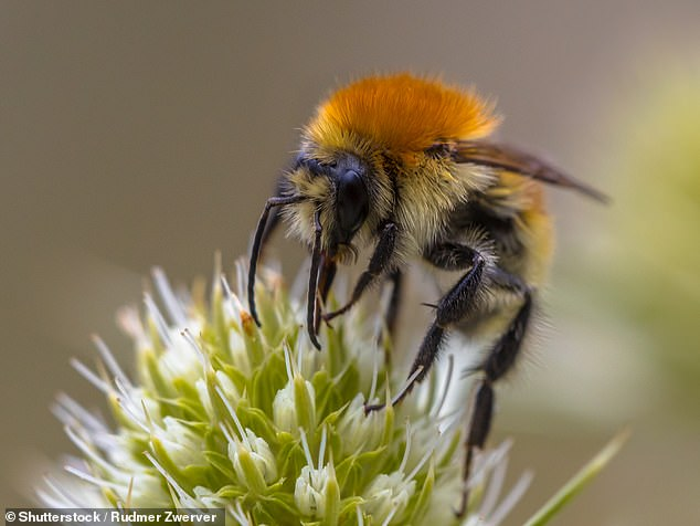 Grass Clippings - Bees & Insects in Decline