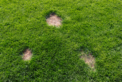 Localised Dry Lawn Patches - Lawn Quencher