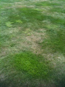 Lawn Dry Patches September