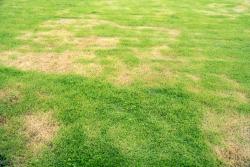 Drought Lawn (2)
