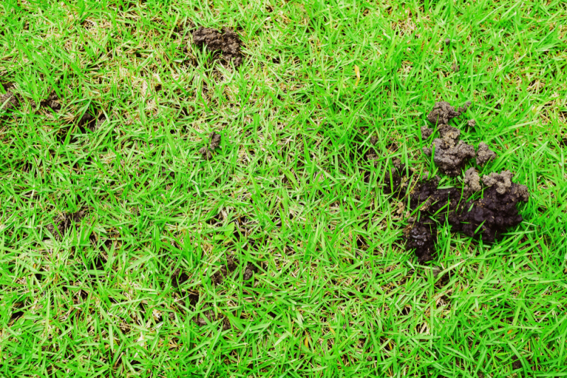 Earthworm Infestation on Lawns